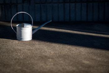 水やりは土が乾燥する前に行うのが原則。 鉢の底穴から水が出てくるまで、真夏は1日2回、春秋は1日1回、冬は2日1回程度、たっぷりと与えてください。