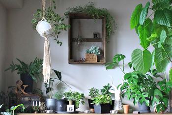寂しくなりがちな壁も、たくさんのグリーンを使えばこんなに鮮やかになります♪  マクラメ編みのプラントハンガーは天井やカーテンレールから吊るせるため、お部屋に動きを出したい時にも使えそうです。