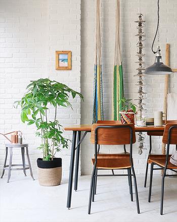 そろそろ芽吹きの季節がやってきますね。  お部屋の彩りを増やし、やってくる季節を迎えるためにも、お部屋にグリーンを置いてみませんか?