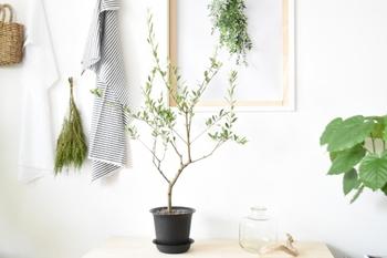 春の室内緑化計画♪グリーンを使った素敵なインテリアとディスプレイ方法