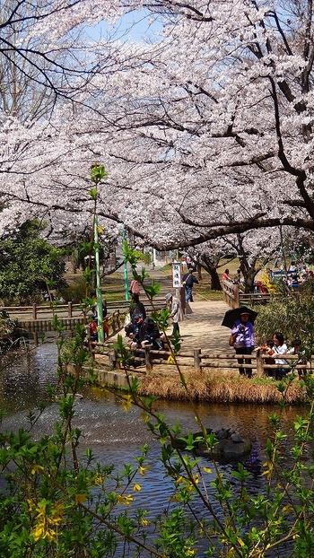 公園内は穏やかな雰囲気なので、家族やカップルなどでのんびりと過ごしたい人におすすめです。池では亀が甲羅干しをしていることも!