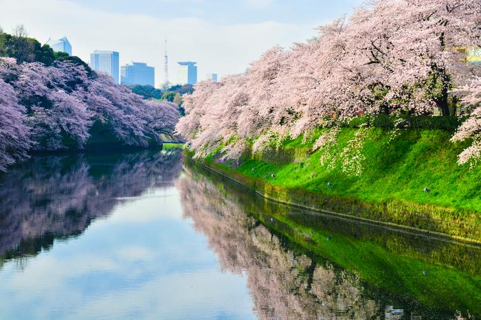 人にあまり知られていなかったり、人出が集中しなかったりするような場所をチョイスすれば、ゆったりとお花見を楽しむことができます。ご紹介した穴場的スポットでのんびり桜を満喫してくださいね。