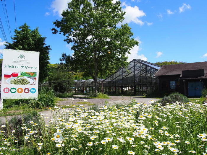大多喜ハーブガーデンは、4500㎡と広大な敷地のなか、全天候型のハーブ園とレストラン、ドッグラン、ビニールハウスに露地の畑と様々備えている施設です。