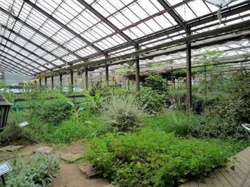 入り口には、香りに関する商品を扱っている香油屋さんが。そこを出ると、今度はガラス張りの高い天井が気持ちの良い、広々とした建物に続きます。屋内ガーデンやレストランがあるエリアです。足元には木道が敷かれ、左右に様々なハーブが植えられています。