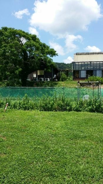 周囲のビニールハウスでは、ガーデンで扱うハーブと野菜を育てています。不定期ですがルッコラの摘み放題(1人300円)が行われます。
