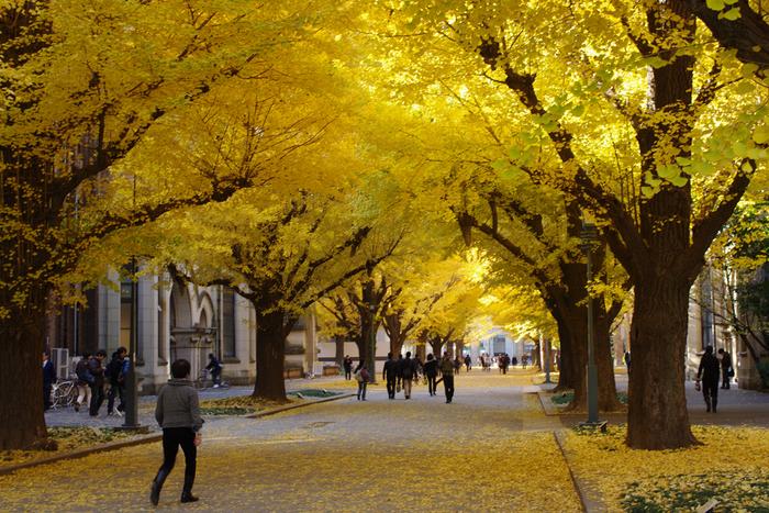 東京大学・本郷キャンパスで。ノスタルジックな雰囲気を楽しもう♫