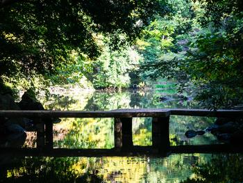 本郷キャンパスで最も自然の豊かさを感じられるのは「三四郎池」周辺です。