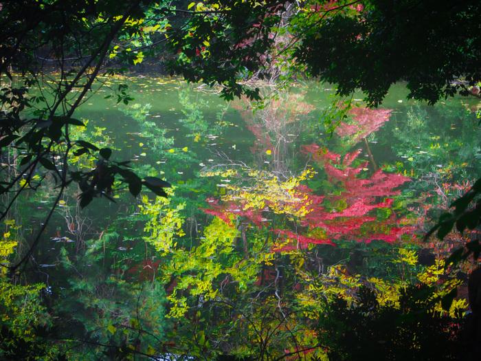 「三四郎池」の周囲は、規模は小さいながらも森を形成し、季節折々で様々な表情を見せてくれる憩いの場です。