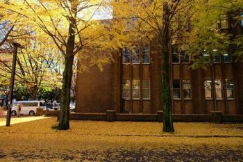 秋には銀杏の葉がじゅうたんのように綺麗に敷かれます。