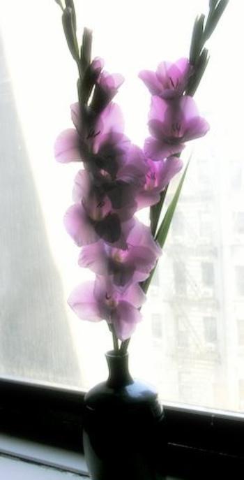 切り花としてもよく見かけるグラジオラス。 高さがあり花もたくさんつくのでとても華やかです。