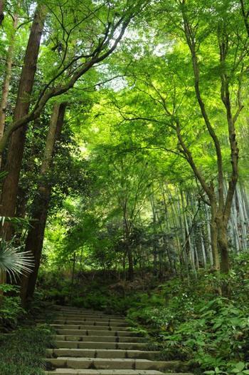 """拝観料をおさめて進むと、石の階段。  """"緑""""の天然の屋根と、山の新鮮な空気に覆われた階段を上り進みます。"""
