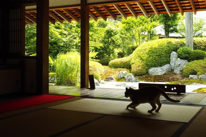 「喜泉庵」では枯山水の庭園を眺めつつ、抹茶を楽しむことができます。