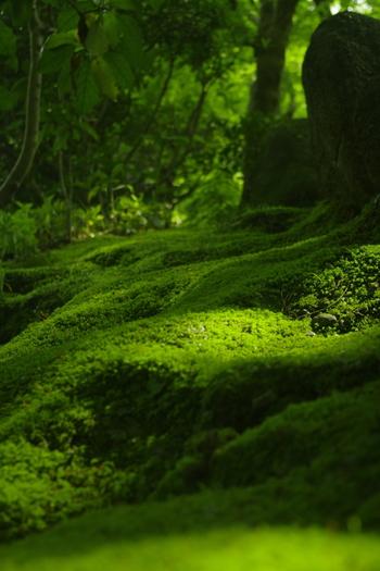 しっとりと光る「苔」。眺めながら歩くだけでも、身心が浄化されるよう。