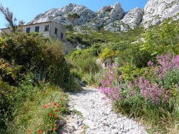 道端に咲く野生のコクリコや草花、そして糸杉など、ありふれた景色をリュバロの世界観で写し取り描き出していきます。