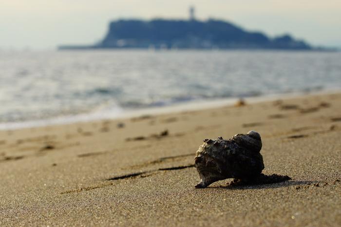 少し休んだ後は海岸へ。 水族館前の片瀬西浜は遠浅で、幅が広くとても歩きやすいのです。 この遠浅の海岸には、冬でもさまざまな生き物がいます。 ただ歩くだけではもったいない!。