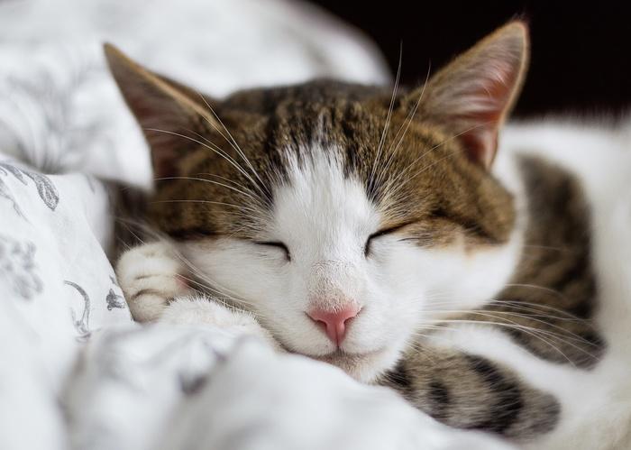 眠っている間も、脳は活動を続けています。このチャンスを逃さないで。眠る前に、脳に「なりたい自分」をイメージしましょう。脳は寝ている間にも、叶えるための準備を着々を進めておいてくれるでしょう。