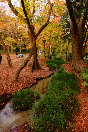 下鴨神社の前に広がる糺の森は、約12万4千平方メートルの広大な敷地に原生林が生い茂る自然豊かな場所。紅葉も見事です。散った紅葉が川を流れる様子を見ることもできます。しんとした空気を味わいたいなら、人が少なめの午前中に行くのがおすすめです。