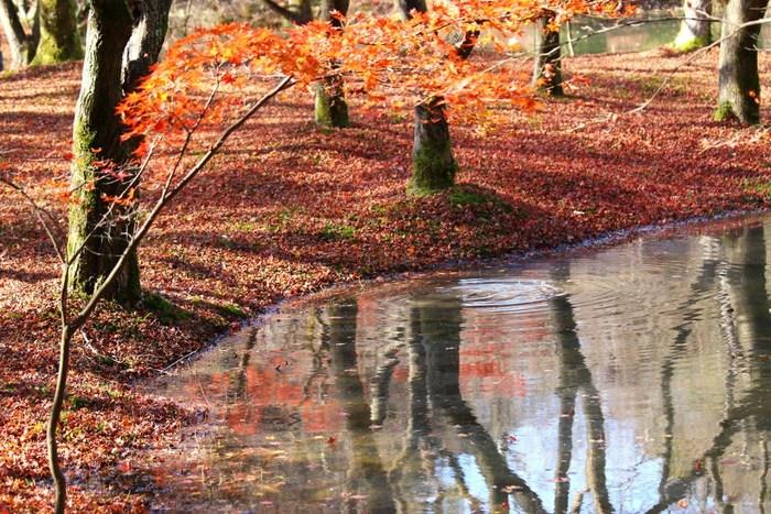 半木(なからぎ)の森が特におすすめです。池の水面に映る紅葉も綺麗ですよ。植物園内には、モミジやイチョウをはじめ約500本もの色づく木々が植えられています。熱帯植物が見られる温室(有料)もありますので、寒い季節もおすすめです。