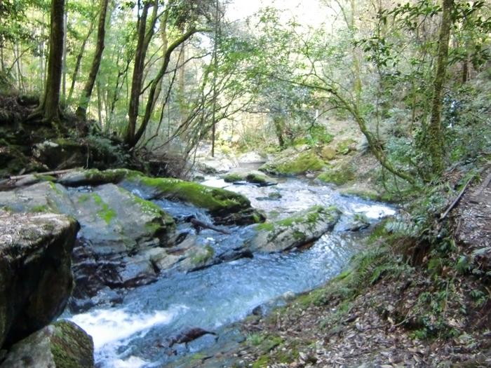 渓谷周辺は地元の方々によるボランティアで遊歩道の整備などが行われていますが、ほとんど手つかずで残されている自然ですから、歩きやすい靴や服装はマスト。トレッキング気分で歩きながら水の流れや滝のしぶき、自生している山野草を眺めていると、心がまるごと洗われるようです。