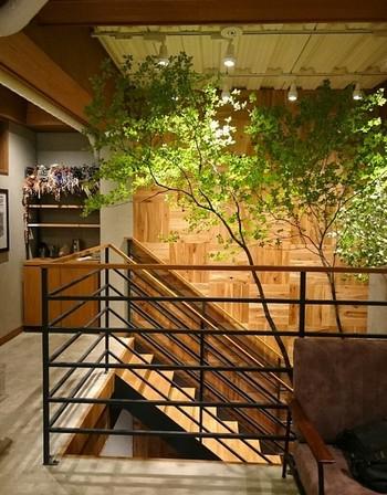 木とグレーを基調としたインテリアに、植物のグリーンが落ち着いた空間を演出しています。電源やWi-Fiなどもあり、ついつい、長居してしまうのもわかりますね。