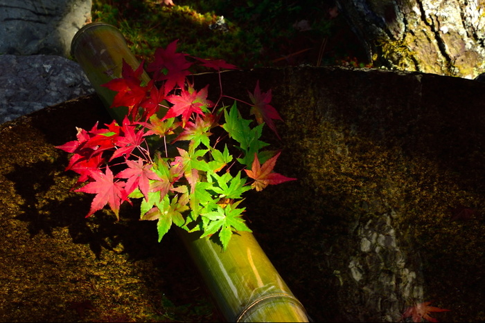 秋の素材を使ったスイーツは、今の時期しか食べられない限定のものもたくさん。秋スイーツを食べて、味覚から京都を楽しみましょう。