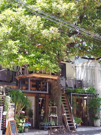 大きな木がカフェを守ってくれているかのよう。自然が近くにある、温かみのある外観です。  レ・グラン・ザルブルは、2014年秋に放映されたドラマ「ディアシスター」にも登場したカフェです。ドラマで注目していた人も多いのでは?