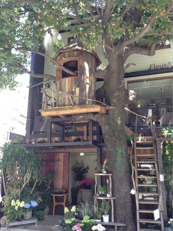 このツリーハウスには登ることもできます。