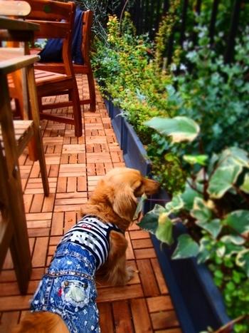 ルーフテラス席は犬と一緒でもOKなのが嬉しい!