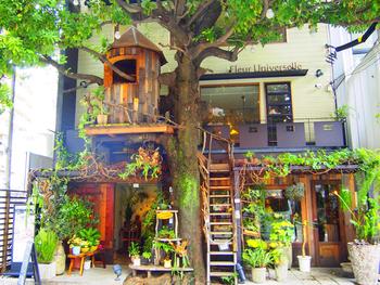 2013年4月にオープンした「レ・グラン・ザルブル」は、早くも行列のできる店に! 開店前から並んでいることもあるので、ランチタイムは予約することをおすすめします。広尾という都心にありながら、花と緑に包まれた空間にはゆったりとした時間が流れています。素敵な安らぎタイムをお過ごし下さい。  shop data|レ・グラン・ザルブル 〒106-0047 東京都港区南麻布5丁目15-11 03-5791-1212|11:00-22:00|不定休