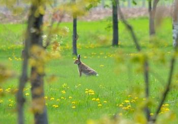 いかがでしたか? 世界にはいろんなラッキーシンボルが語り継がれています。その土地土地ならではの記憶だったり、人の幸せを願うお守りだったり。長く大事にしたくなるものを、見つけてみてくださいね。  写真はウサギ。うさぎも各地で幸運のシンボルにされることの多い動物ですね。