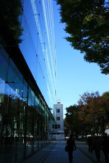 図書館の少し重々しい空気は一切感じさせません。 通りに面した大きなガラスはケヤキ並木にとてもよく合います。