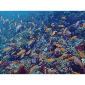 離島の楽しみと言えば、きれいな海ではないでしょうか? 初島周辺の海は沖縄程に青くきれいで美しい光景が広がっています。  専門のインストラクターが指導してくれるので、ダイビング初心者の方でも安心です。
