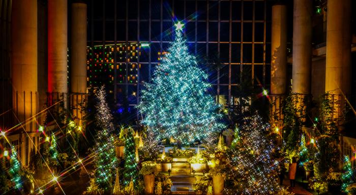 「淡路夢舞台」のシンボル的施設である「奇跡の星の植物館」は花と緑の感動空間創造実験型植物館として2000年に開館しました。自然の美しさを五感で体験し、庭園文化を学んだり、自然環境について考えたり、これからの自然と都市の融合について考えます。写真はクリスマス近くのイルミネーションが施された様子。クリスマスシーズンには、例年「光と花のページェント-クリスマスフラワーショー」が開催されています。