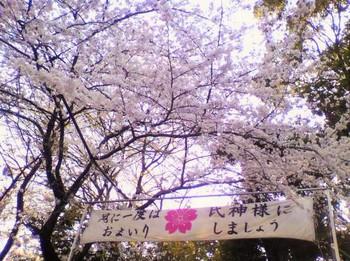 桜の名所としても知られる同神社。 安産のお守りにも桜の花が織り込まれていたり・・・