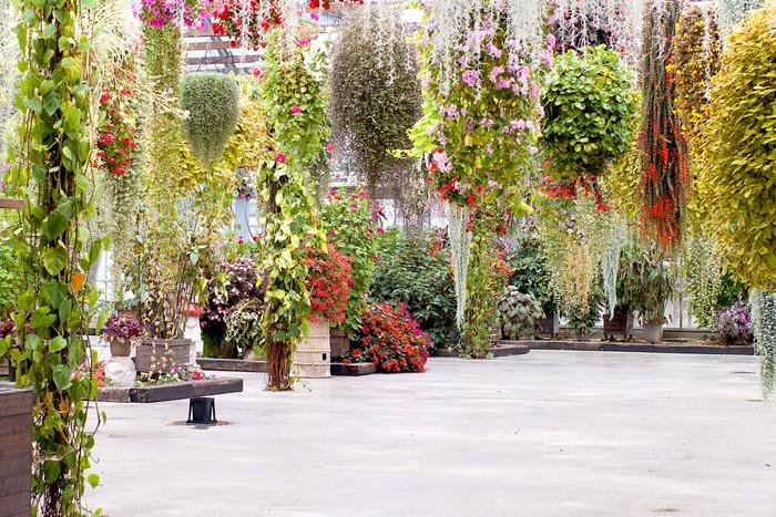 神戸動物王国のエントランスを入るとすぐに、天井から美しい花々が吊るされたフラワーシャワーが目に飛び込んできます。空調がよく効いた快適なフラワーシャワーでは、年間を通して美しい花々を観賞することができます。