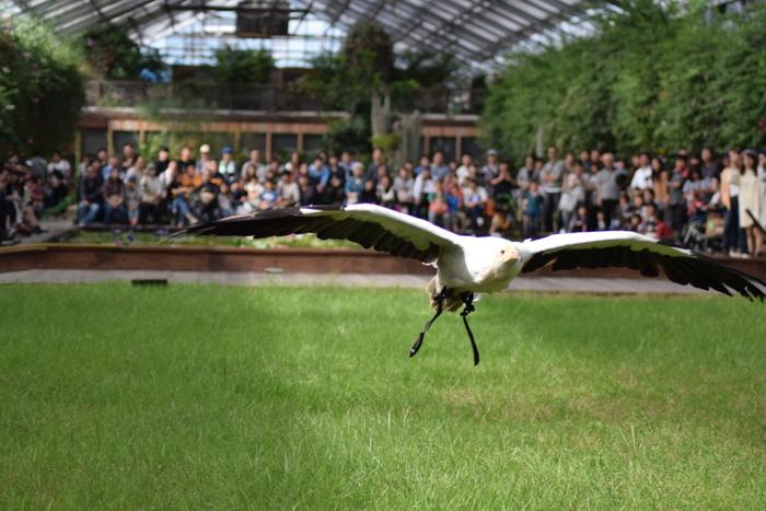 神戸どうぶつ王国では、無料のバードショーも行われます。調教師の合図とともに、ハヤブサやフクロウたちが客席ギリギリの高さで飛び交う様は迫力満点です。