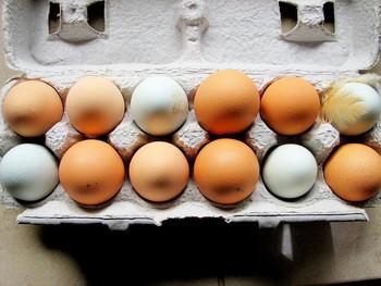 手作りならではのふんわり食感に欠かせない卵。卵は、卵黄と卵白を分け、卵黄のみを使います。