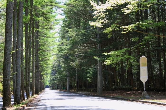 三笠通りは緑あふれる街路樹が立ち並ぶ、旧軽井沢から旧三笠ホテルに続く通りです。 駅前の喧騒を離れ、ドライブやサイクリングを楽しめます。