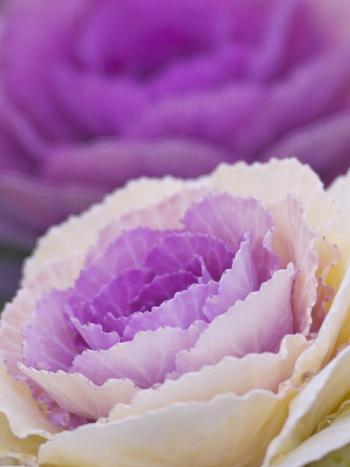 花言葉は「愛を包む」
