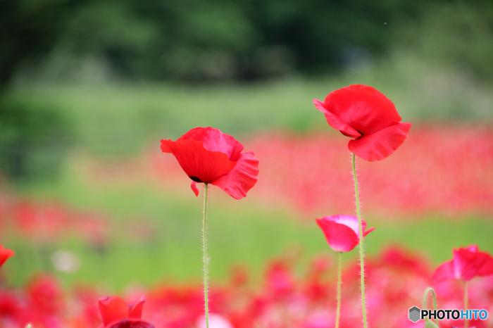 花と自然を愛するナチュラリスト「ミッシェル・アンリ」の幸せ色に輝くアートな世界