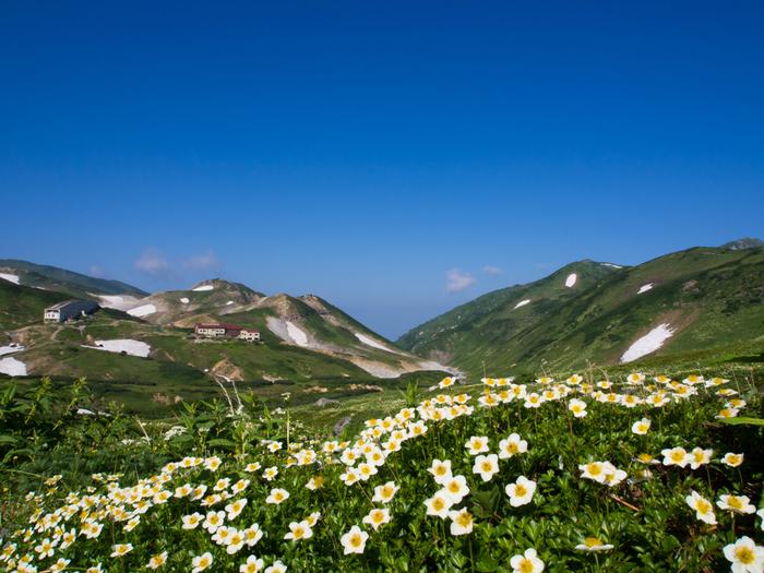 花の季節はまるで別世界。毎週のように咲く花が変わるから、何度でも訪れたくなるんです。