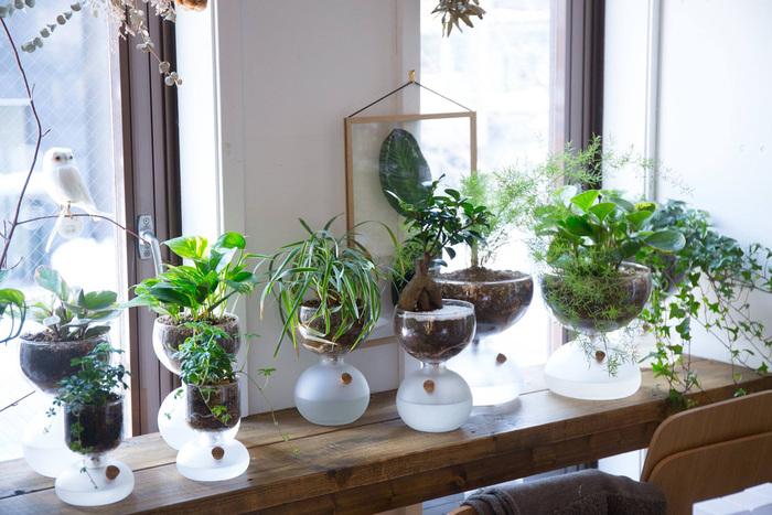 こちらはデンマークのガラスメーカー【HOLME GAARD】(ホルムガード)の「プラントガラス」。下のコルク栓の部分から水を入れると、上下に通じている合成繊維の糸が水を吸い上げて、植物に適度に水を与える仕組みになっています。窓辺のスペースにたくさん並べると楽しいですね☆