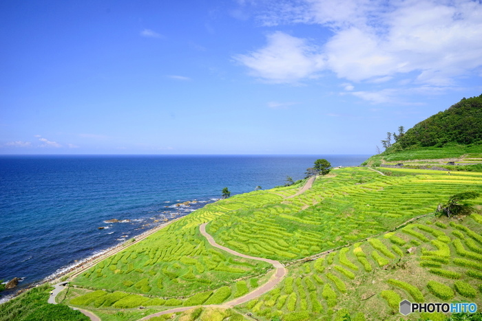 「白米千枚田(しろよねせんまいだ)」は、石川県輪島市白米町にある棚田で、その絶景は「日本の棚田百選」「国指定文化財名勝」に指定されています。1004枚もの狭小な水田が折り重なるように広がる光景は、能登のビュースポットとしてとくに人気が高まっています。