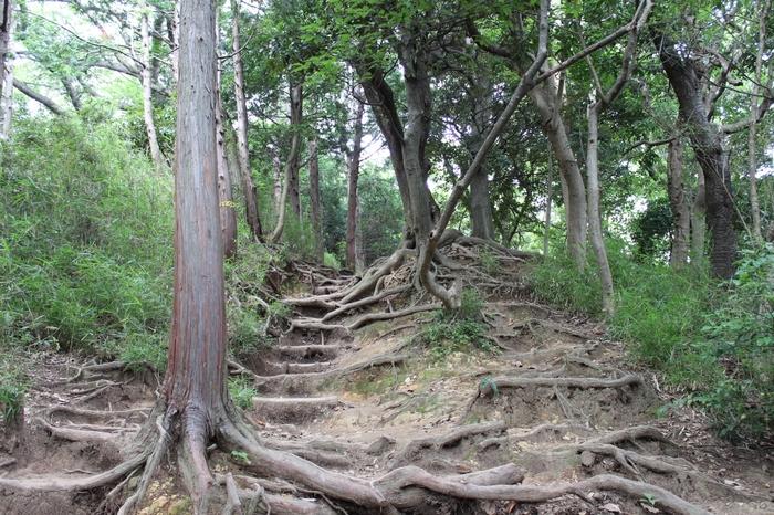 大仏前の喧騒から一瞬で自然と静寂の中にワープできます。そして、木がしっかりと根付いた山道は、まるで階段のようです!普段運動不足の人は翌日筋肉痛になっちゃうかも!