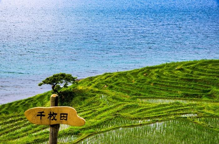 2011年「能登の里山里海」が、「トキと共生する佐渡の里山」とともに日本で初めて「世界農業遺産」に認定されました。その代表的な場所としても話題の白米千枚田。昔ながらの農法を今に伝える貴重な棚田です。
