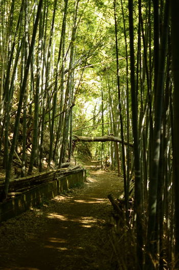 竹林が多いけもの道をてくてく歩きます。