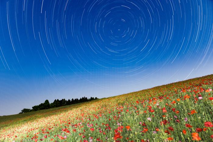 「秩父高原牧場」埼玉県・・・ポピーの植栽は、平成18年から始まり、平成20年からはポピーまつりを開催しています。面積は5.0ha。1500万本を超える真っ赤なコクリコが迎えてくれますよ!