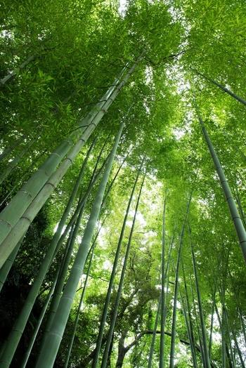 何気ない日常のひとこまも、さりげない自然の営みに目を向ければ、美しい世界が広がっています。