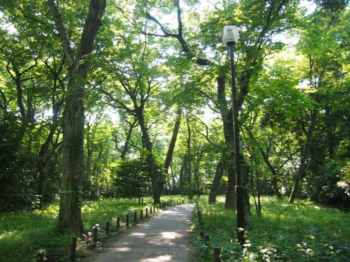 都内唯一の植物公園である「神代植物園」はとっても広大!深大寺境内に隣接しているので、併せて楽しみたい。自然のなかをたっぷり散策したい方はぜひ訪れて。
