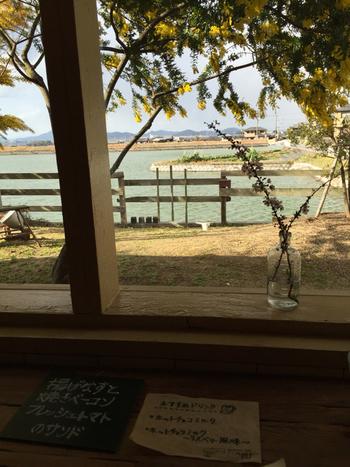 カフェの近くの水辺も、席からのぞむことができます。
